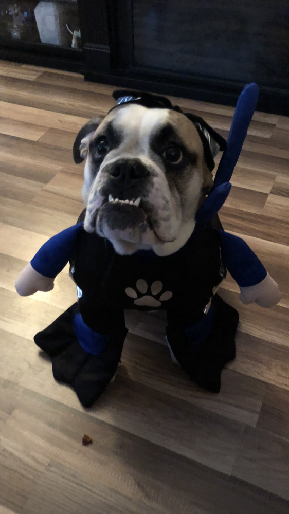 Maggie's dog, Vito.